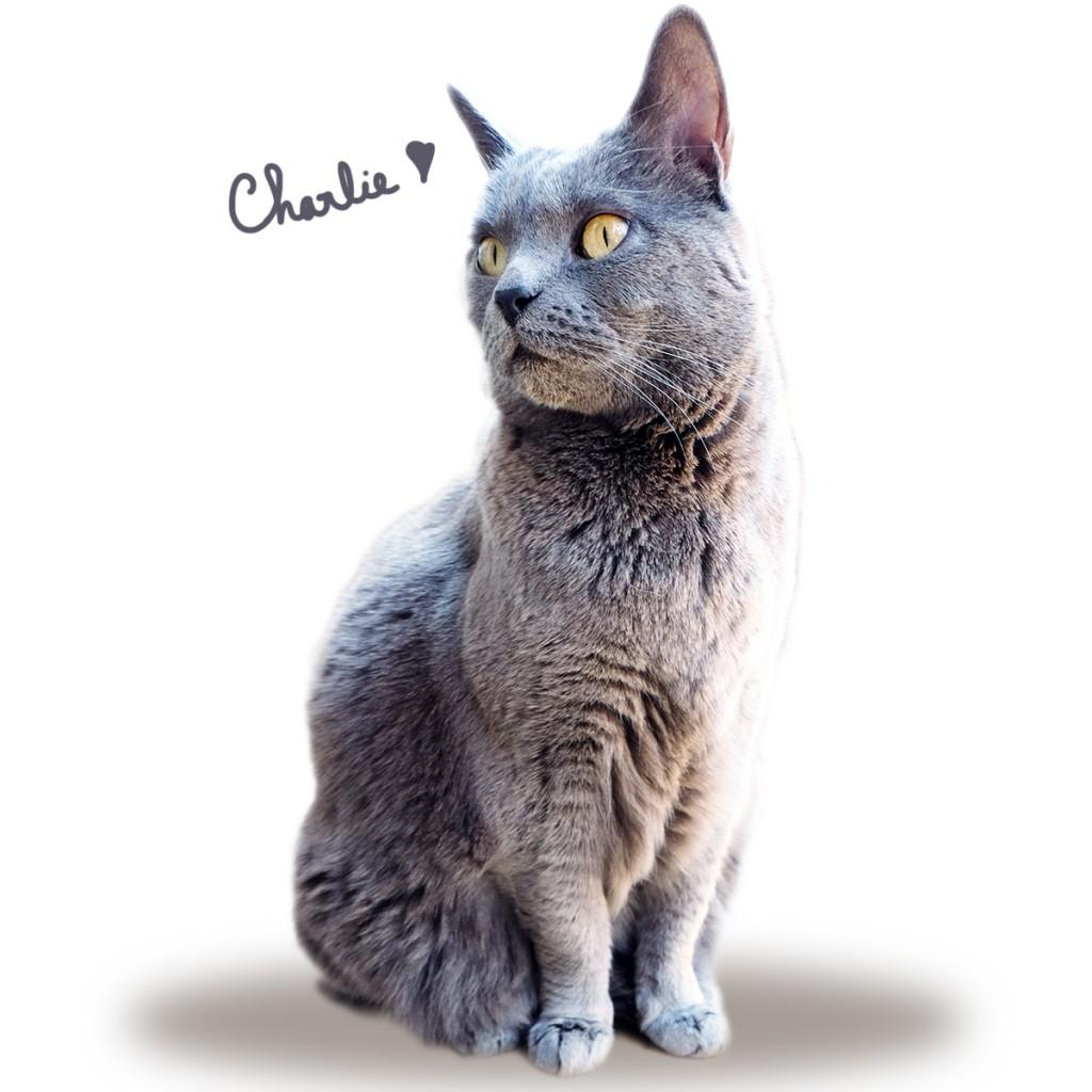 Mon Charlie